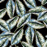 Безшовная тропическая картина с листьями банана Стоковая Фотография RF