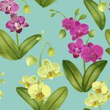 Безшовная тропическая картина с цветками орхидеи Флористическая предпосылка для ткани ткани, обоев, оборачивая акварель Стоковые Фото