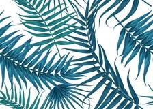 Безшовная тропическая картина, экзотическая предпосылка с ветвями пальмы, листьями, лист, листьями ладони Бесконечная текстура Стоковое Изображение