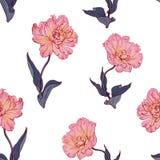 Безшовная флористическая винтажная картина с тюльпанами Стоковая Фотография