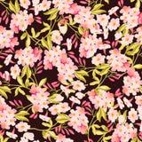 Безшовная флористическая картина с розовыми цветками Стоковые Изображения RF