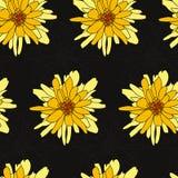 Безшовная флористическая картина с хризантемой Стоковая Фотография RF