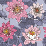 Безшовная флористическая предпосылка с зацветая лилиями воды Стоковая Фотография RF