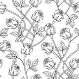 Безшовная флористическая текстура с розами Чернота и Стоковые Изображения RF