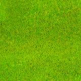 Безшовная repeatable зеленая предпосылка картины мха Стоковое Изображение RF