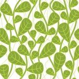 безшовное предпосылки ботаническое Стоковые Фото