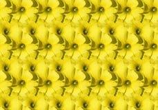 безшовное предпосылки флористическое Стоковые Фотографии RF