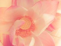безшовное предпосылки романтичное Стоковые Фото