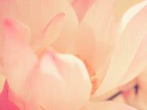 безшовное предпосылки романтичное Стоковая Фотография RF