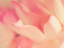 безшовное предпосылки романтичное Стоковые Фотографии RF