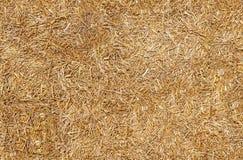 Безшовное сено текстуры, солома Стоковая Фотография