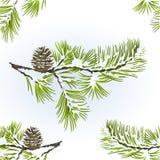 Безшовное vitage естественной предпосылки зимы ветви конуса сосны и сосны текстуры снежное vector иллюстрация editable иллюстрация штока