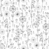 Безшовной иллюстрация чернил цветка цикория цветочного узора вектора нарисованная рукой ботаническая, эскиз doodle изолированная  Стоковые Фото