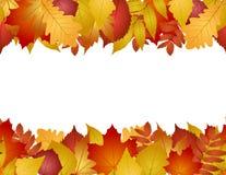 Безшовно с листьями осени Стоковые Изображения