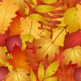 Безшовно с листьями осени Стоковые Изображения RF