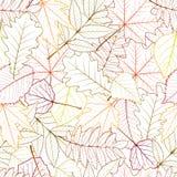 Безшовно с листьями осени Стоковое Изображение