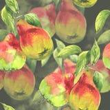 Безшовные груши акварели картины Стоковое Изображение RF