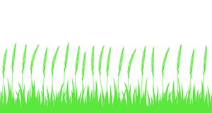 Безшовные зеленая трава и уши Стоковые Изображения