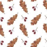 Безшовные картина, листья дуба и ягоды на белизне Стоковая Фотография RF