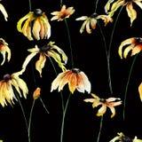 Безшовные обои с желтыми цветками Gerber Стоковое фото RF
