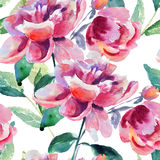 Безшовные обои с красивым цветком пиона Стоковая Фотография RF