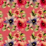 Безшовные обои с полевыми цветками Стоковые Изображения RF