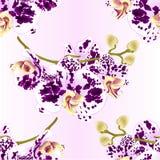 Безшовные орхидеи ветви текстуры цветут запятнанный фиолетовые и белые стержень тропического завода фаленопсиса и средство года с Стоковые Фото
