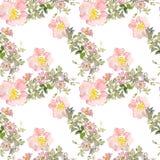 Безшовные розы одичалого пинка картины цветут и зеленеют листья Иллюстрация акварели флористическая Ботанический декоративный эле Стоковые Изображения RF
