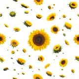 Безшовные солнцецветы Стоковое фото RF