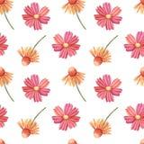Безшовные цветки картины, coneflower и космоса Стоковые Фотографии RF