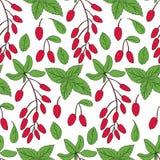 Безшовный барбарис картины, вектор ветви лист мяты нарисованный рукой изолированный на белой предпосылке, красочной свежей ягоде Стоковая Фотография RF