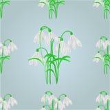 Безшовный вектор предпосылки весны snowdrops текстуры Стоковое Фото