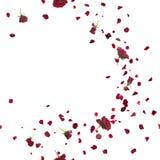 Безшовный ветерок красных роз на белизне Стоковое Изображение