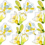 Безшовный вид freesia цветка картины illustratio вектора радужки Стоковое Изображение RF