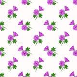 Безшовный завод vio лист цветка фонового изображения красочный ботанический Стоковые Фотографии RF