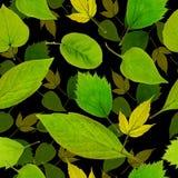 Безшовный зеленый цвет выходит предпосылка Стоковые Фото