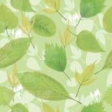 Безшовный зеленый цвет выходит предпосылка Стоковое Фото