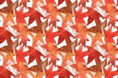 Безшовный дизайн 2 кленового листа Стоковое Изображение RF