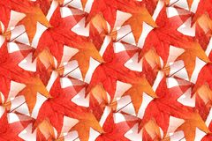 Безшовный дизайн 1 кленового листа Стоковое Изображение