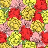 Безшовный лютик цветочного узора, цветок asiaticus Trollius, эскиз вектора Globeflower нарисованный рукой изолированный на белизн Иллюстрация штока