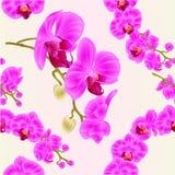 Безшовный пурпур фаленопсиса орхидей текстуры цветет стержни тропических заводов зеленые и иллюстрация f винтажного вектора бутон Стоковые Фото