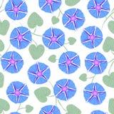 Безшовный с ипомея цветка, славой утра Иллюстрация вектора без прозрачности Стоковое фото RF