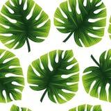 Безшовный тропический орнамент листья зеленого цвета иллюстрация штока