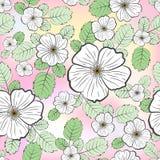 Безшовный цветочный узор, белые цветки dogrose и зеленые листья, на светлой предпосылке с покрашенными пятнами иллюстрация вектора
