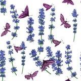 Безшовный цветочный узор с лавандой и бабочками на белизне Стоковая Фотография