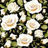 Безшовный цветочный узор с белыми розами на черной предпосылке Стоковая Фотография RF