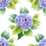 Безшовный цветочный узор с гортензиями иллюстрация вектора
