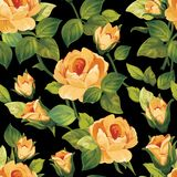 Безшовный цветочный узор с красивыми розами Иллюстрация штока