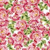 Безшовный цветочный узор с пионами Стоковые Фотографии RF