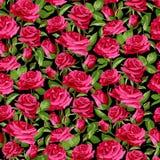 Безшовный цветочный узор с розовыми розами на черной предпосылке Стоковые Фото